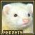 Ferrets: