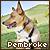Pembroke Welsh Corgis: