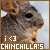 Chinchillas: