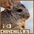 Chinchillas: