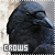 Crows:
