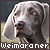 Weimaraner: