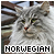 Norwegian Forest: