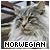 Norwegian Forest: